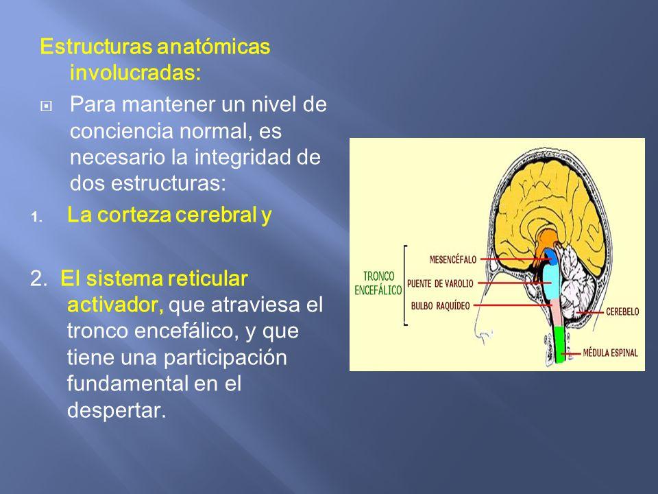 Fisiopatología :Alteración del estado de conciencia. - ppt descargar
