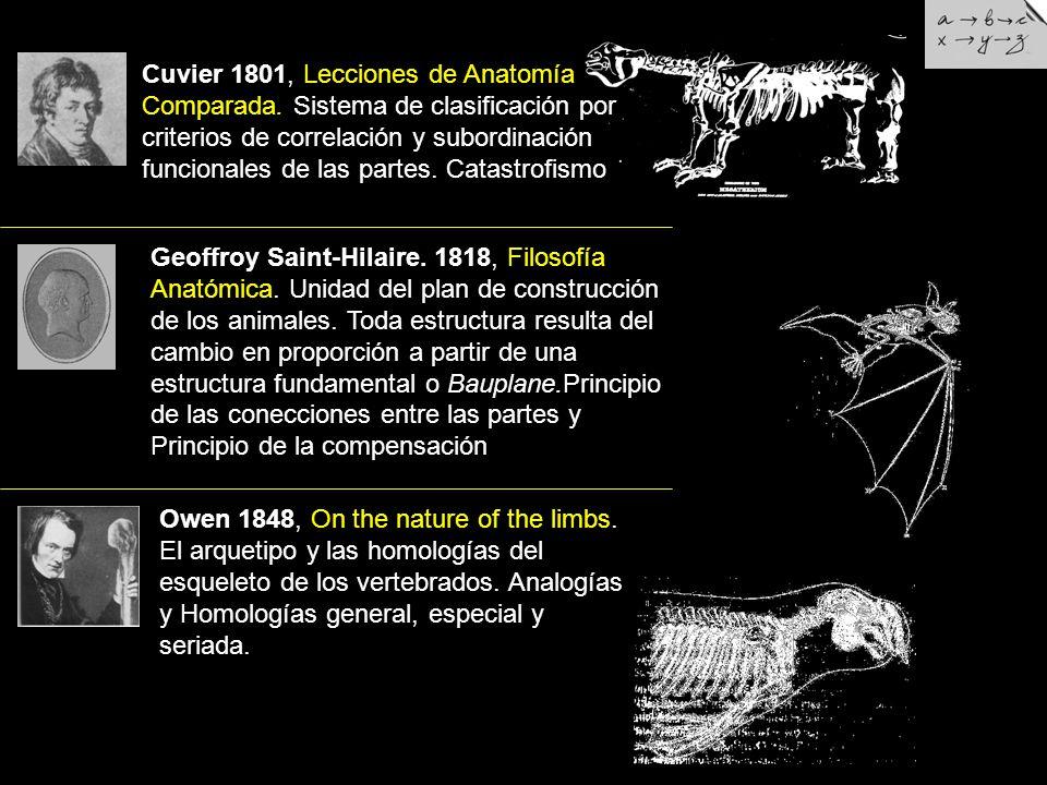 TEORIA DE LA EVOLUCION POR SELECCION NATURAL - ppt video online ...