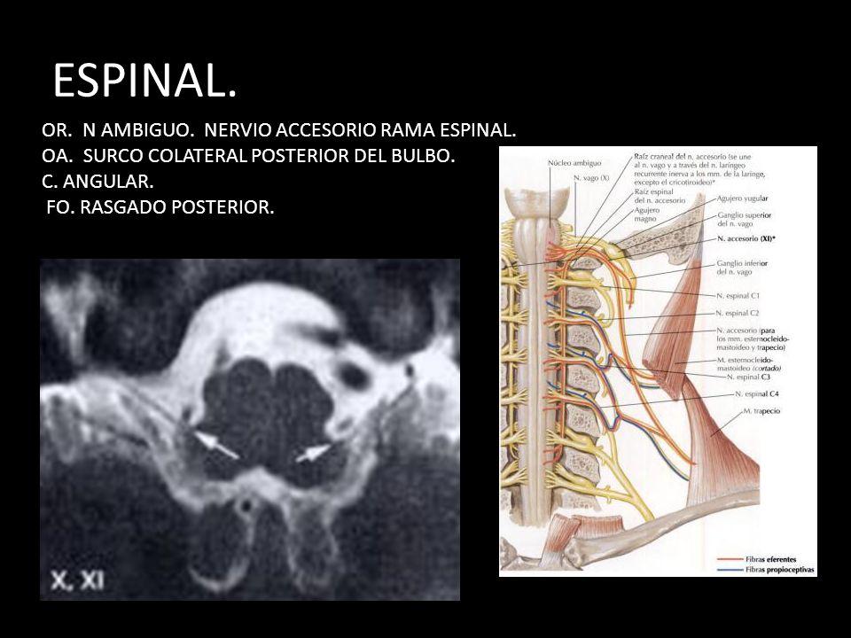 DR. IGNACIO LUGO ALVAREZ. R.RM. - ppt descargar