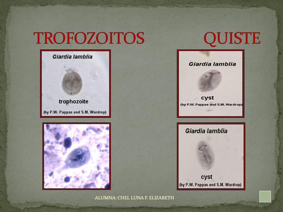 giardia quistes y trofozoitos