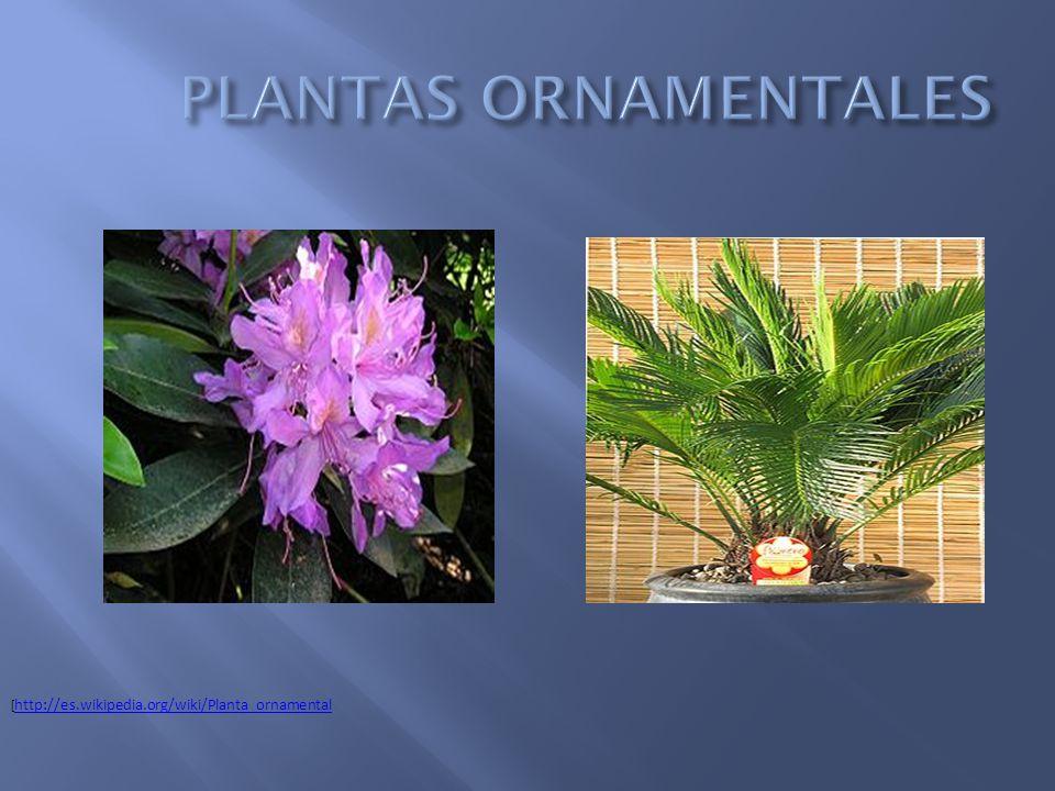 Plantas tipos de plantas seg n su construcci n seg n su for Definicion de plantas ornamentales