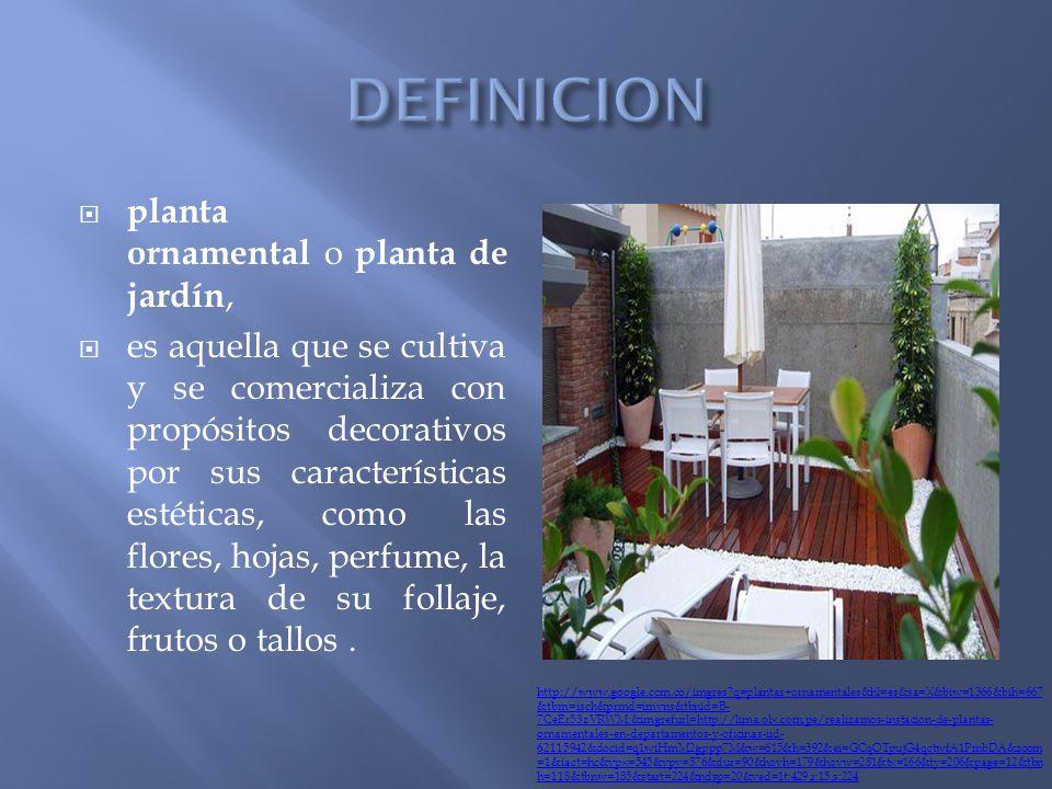 plantas tipos de plantas seg n su construcci n seg n su