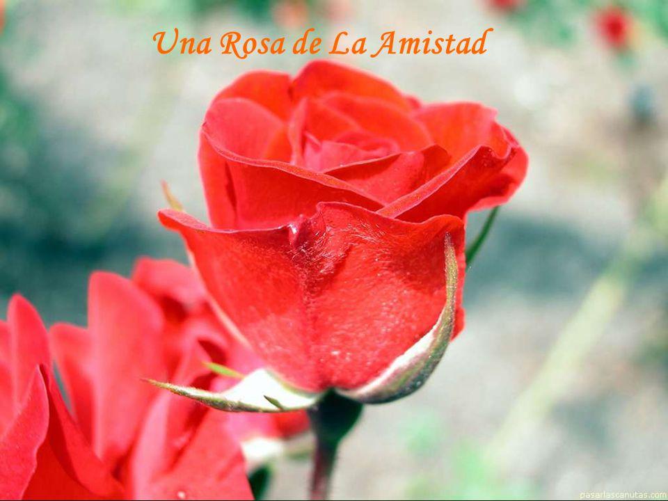 10 Rosas Para Ti Te Ofrezco Ppt Descargar
