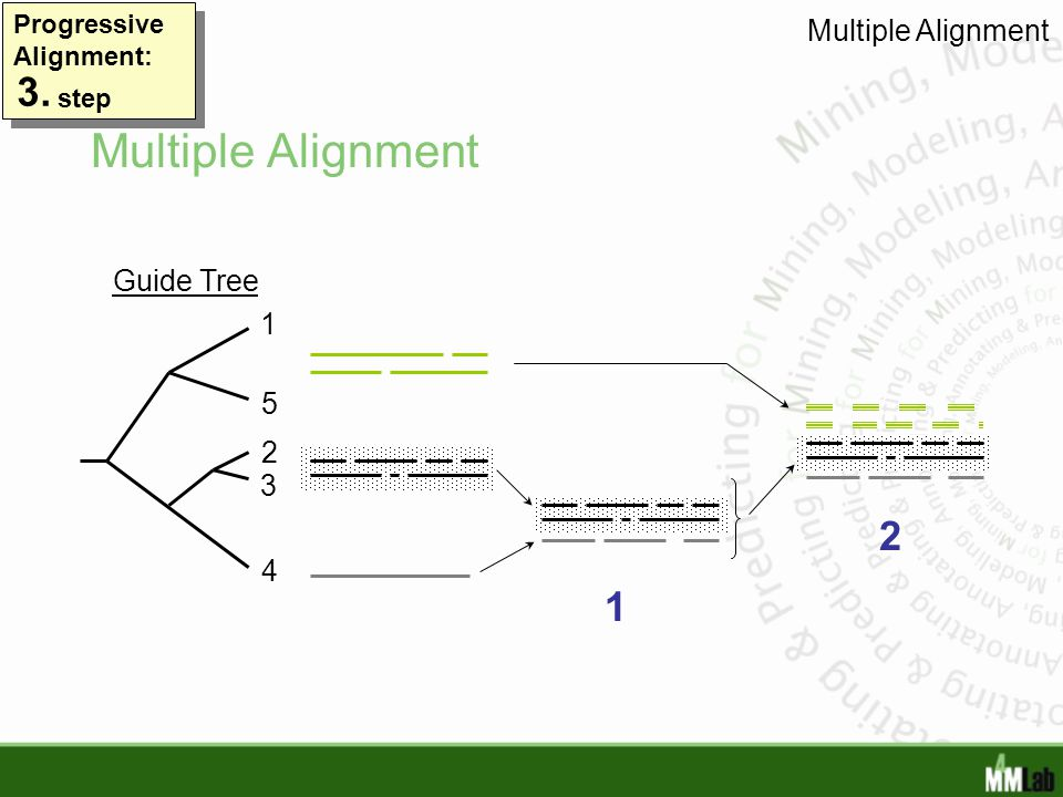 Multiple Alignment 3. 2 1 Multiple Alignment Guide Tree 1 5 2 3 4