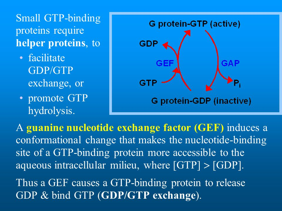 Small GTP-binding proteins require helper proteins, to