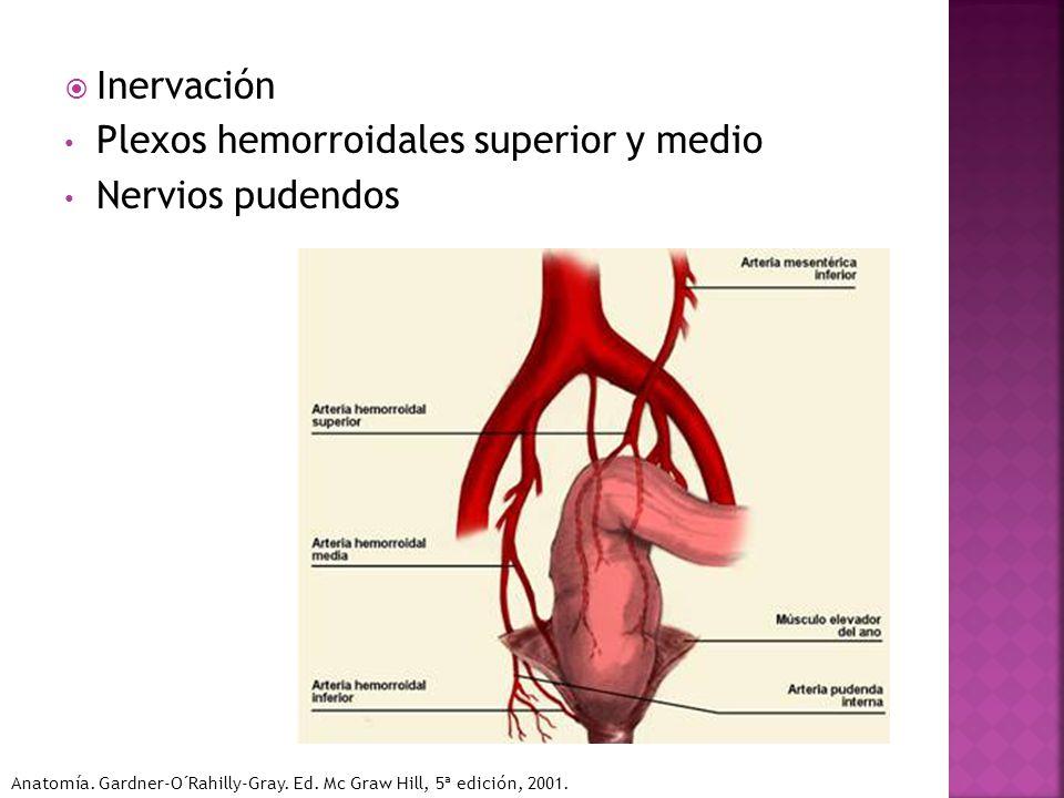 Anatomía del riñón, uretÉros, vejiga, uretra, recto y ano - ppt ...