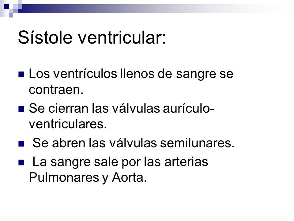 Encantador Anatomía Y Fisiología De La Sangre Capítulo 19 ...