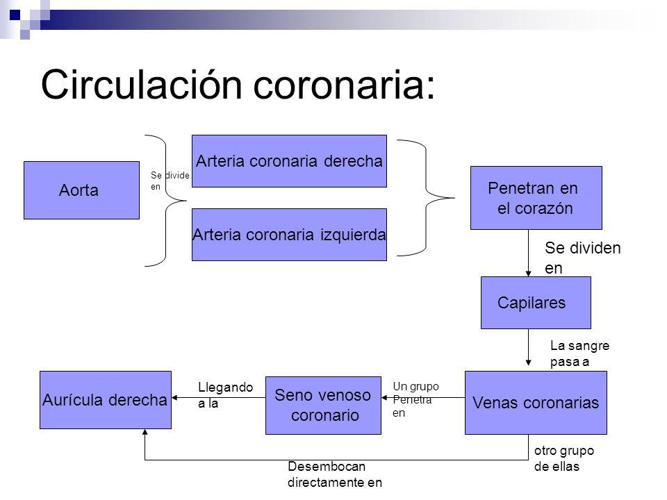 Conocen la anatomía y fisiología del sistema circulatorio. - ppt ...