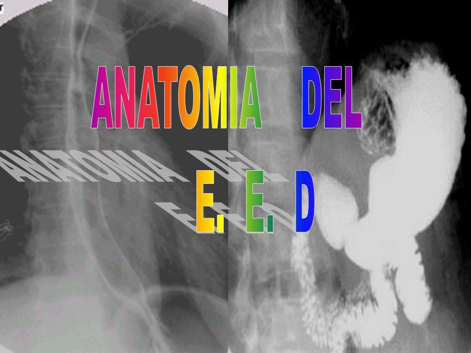 ANATOMIA DEL E. E. D. - ppt descargar