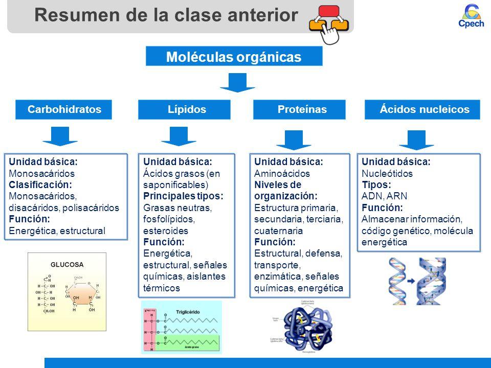 Teoría Celular Diversidad Celular Células Procariontes Y