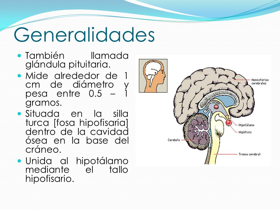 HipÓfisiS.: geneRaLidades oRigeN embriOnariO histOLogiá - ppt video ...