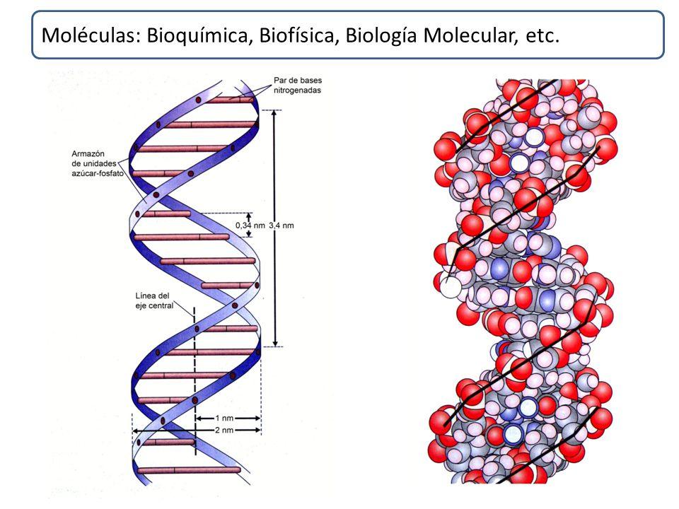 BIOLOGÍA GENERAL. - ppt descargar