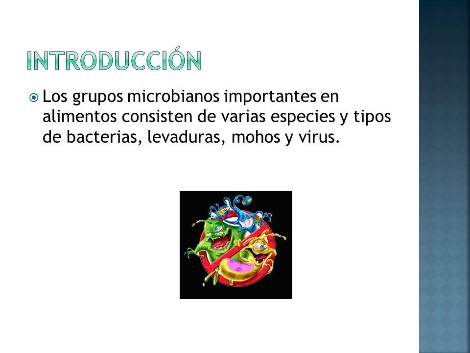 Características De Microorganismos Predominantes En
