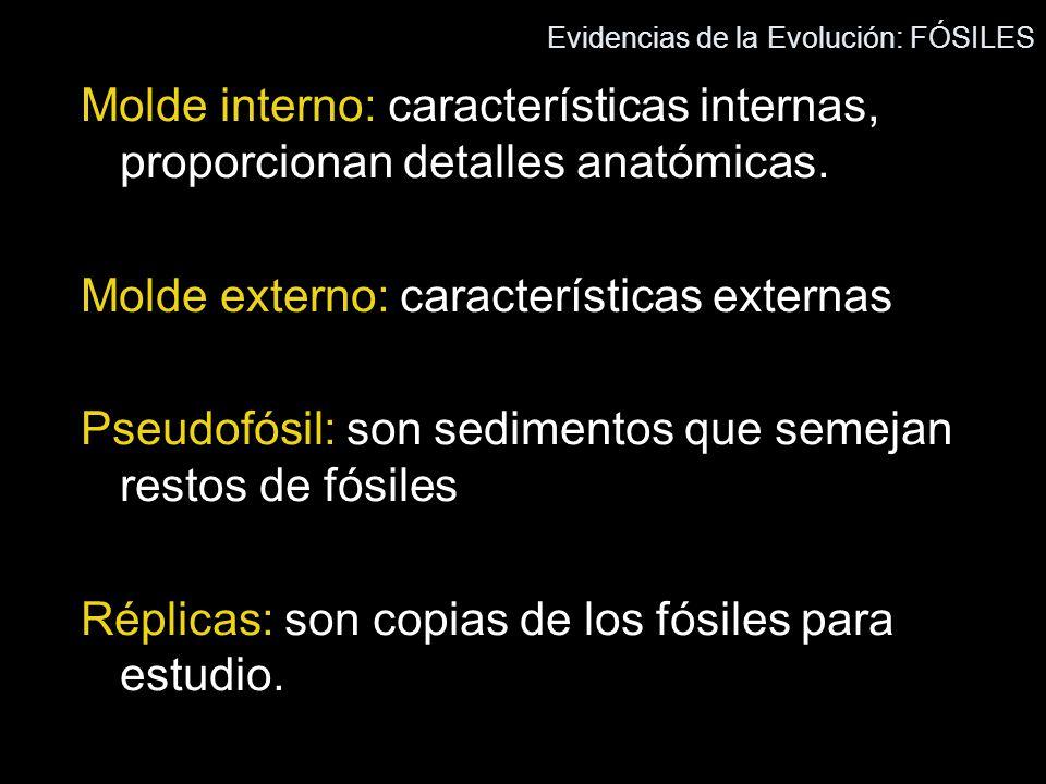 Evidencias de la Evolución - ppt video online descargar