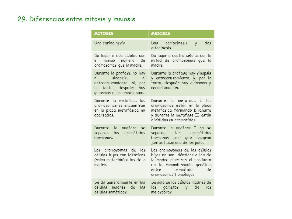 Tema 11 Nucleo Y Ciclo Celular Ppt Descargar