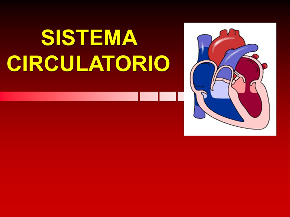 Circuito Circulatorio : Sistema circulatorio ppt descargar