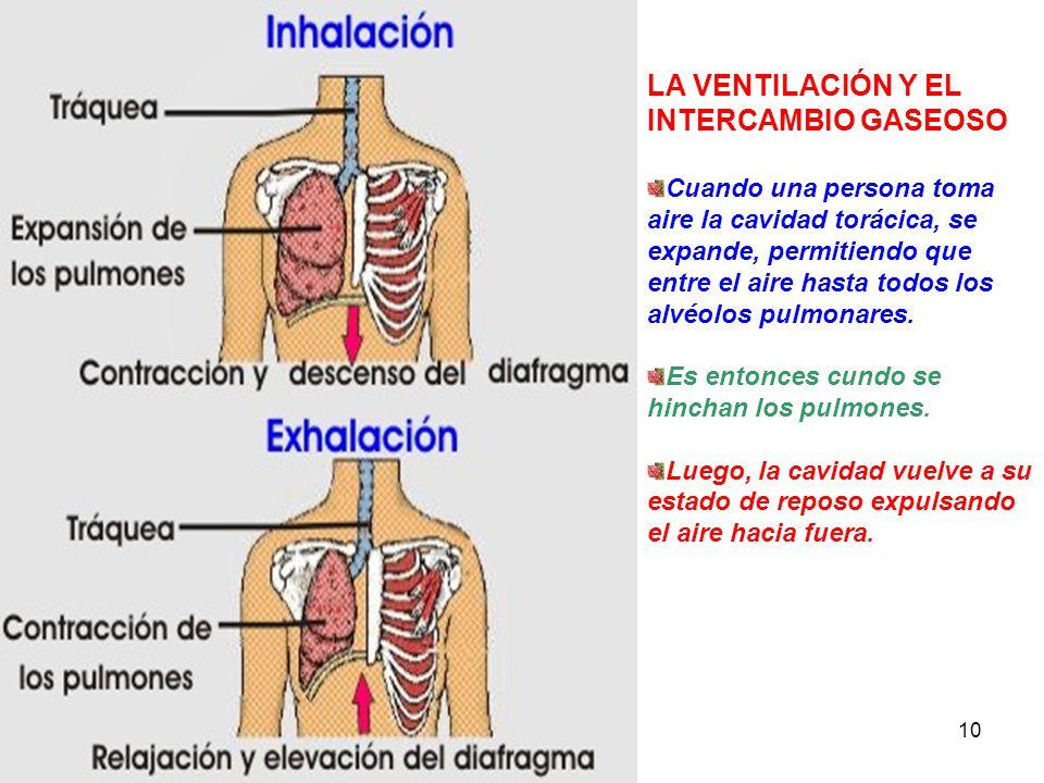 La función del aparato respiratorio es la de hacer que entre oxígeno ...