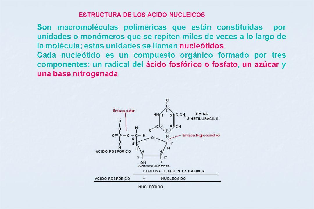 Bases Moleculares De La Herencia Ppt Descargar