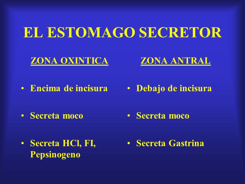 SERVICIO DE GASTROENTEROLOGIA HOSPITAL DANIEL CARRION - ppt descargar