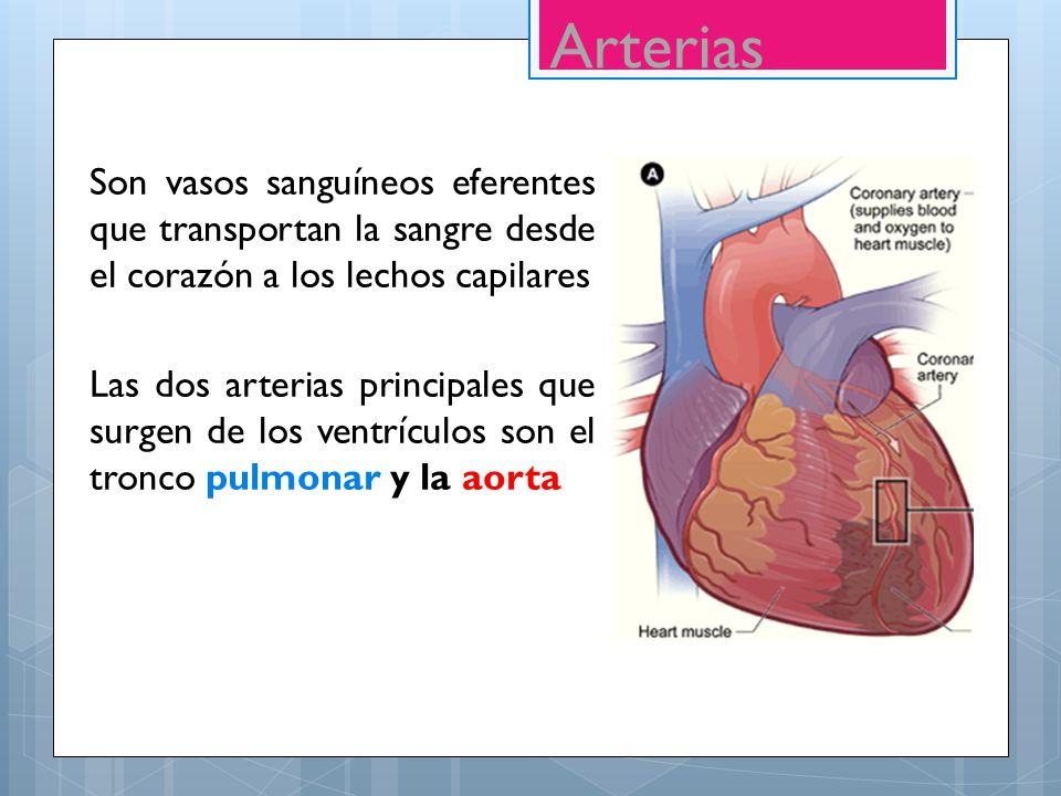 SISTEMA CARDIOVASCULAR - ppt video online descargar