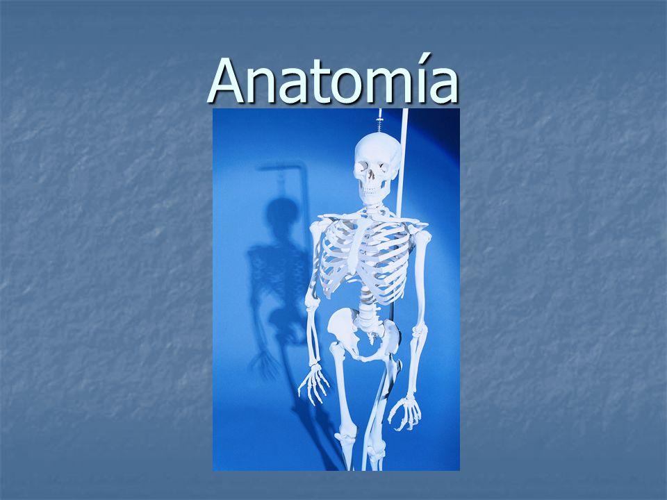 Anatomía. - ppt descargar