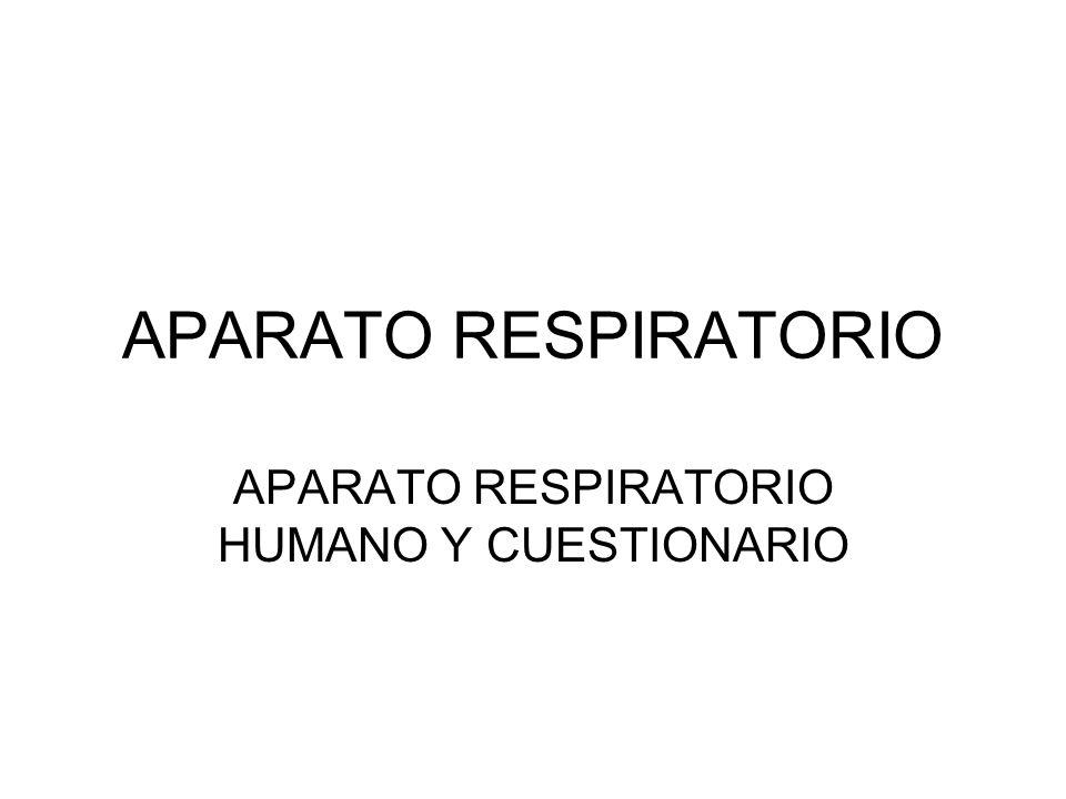 APARATO RESPIRATORIO HUMANO Y CUESTIONARIO - ppt descargar