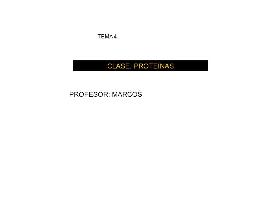 TEMA 4. CLASE: PROTEÍNAS PROFESOR: MARCOS. - ppt descargar