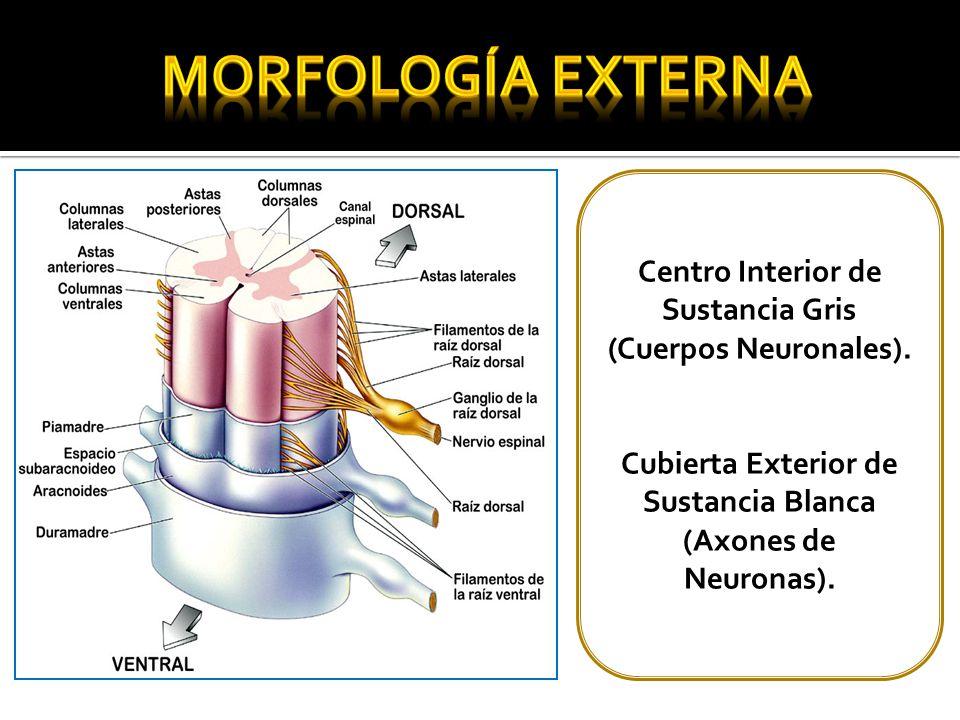 María Jesús Muñoz Docente Anatomía UCINF Kinesióloga - ppt video ...