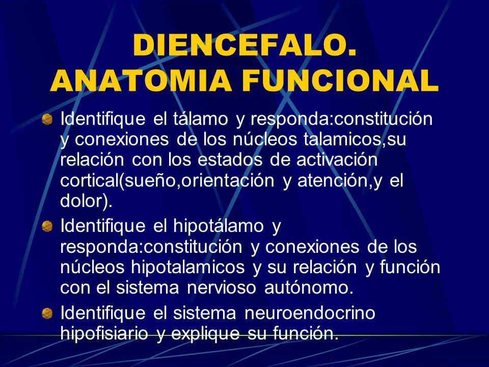 NEUROANATOMIA FUNCIONAL MANUAL TEORICO PRACTICO. - ppt descargar