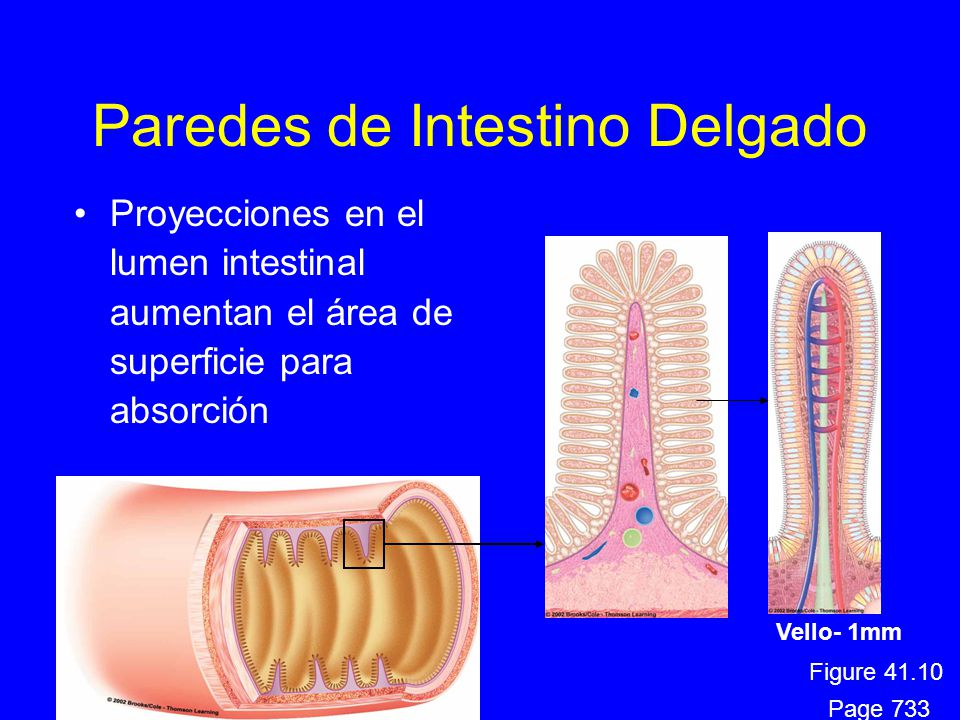Digestión y Nutrición Humana - ppt descargar