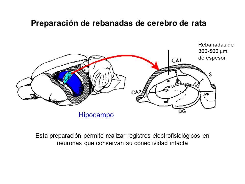 Bases Fisiológicas del Aprendizaje y la Memoria - ppt video online ...