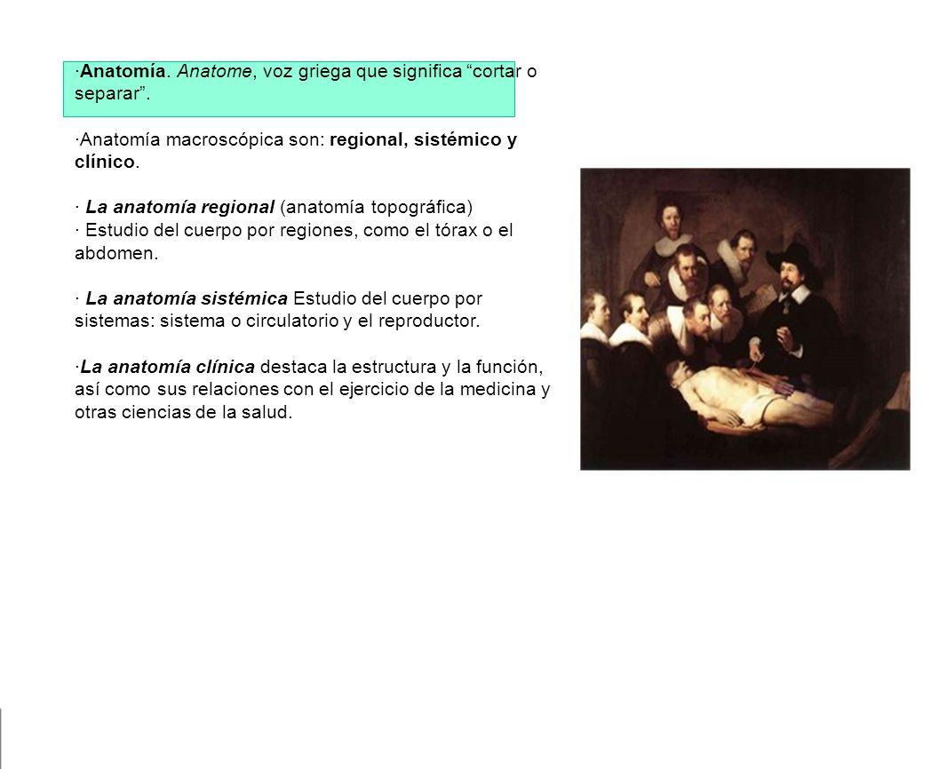 Anatomía macroscópica - ppt descargar