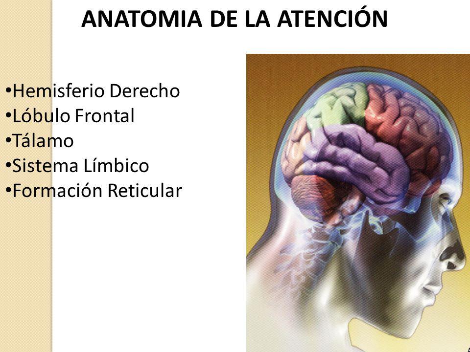 Psicofisiologia de la Atención - ppt video online descargar