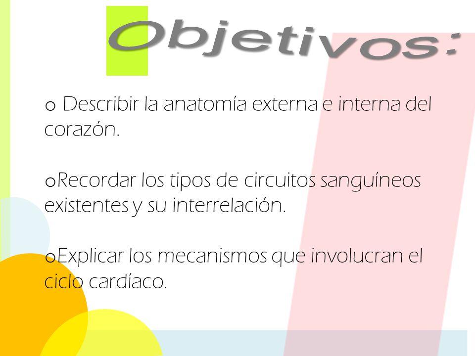 Sistema cardiovascular: El corazón - ppt video online descargar