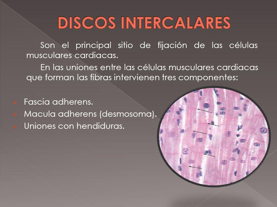Magnífico Discos Intercalados Molde - Imágenes de Anatomía Humana ...