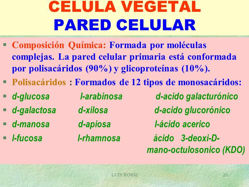 Celula Vegetal Eucariótica Puede Ser Autótrofa ó