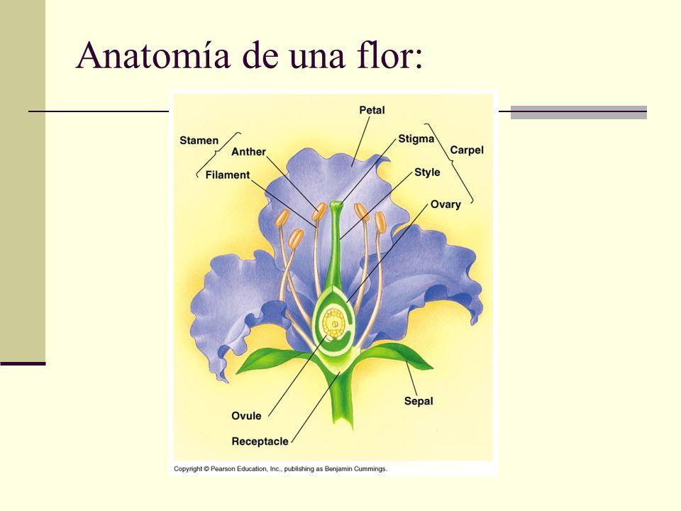 Perfecto Cuál Es La Anatomía Vegetal Ideas - Imágenes de Anatomía ...