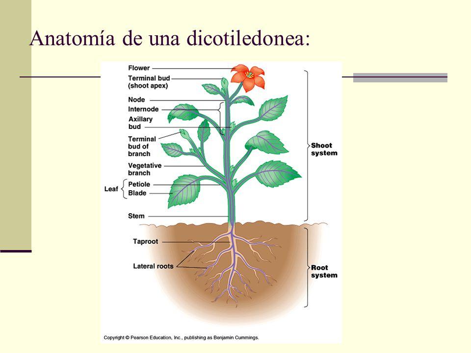 Magnífico La Anatomía De Una Planta Componente - Imágenes de ...