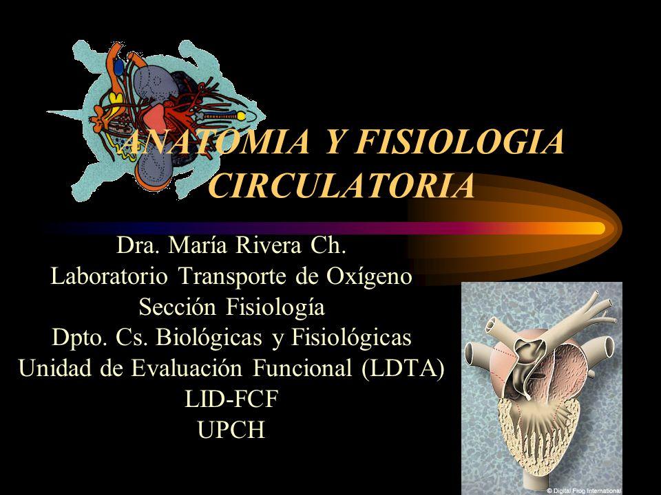 ANATOMIA Y FISIOLOGIA CIRCULATORIA - ppt descargar