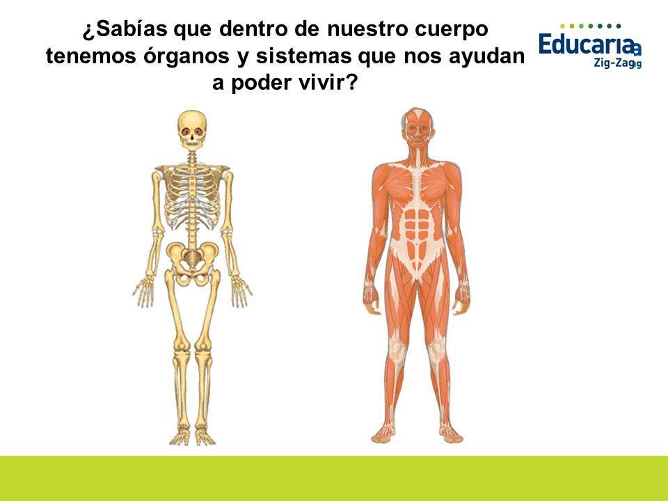 Órganos Vitales, huesos y músculos - ppt descargar