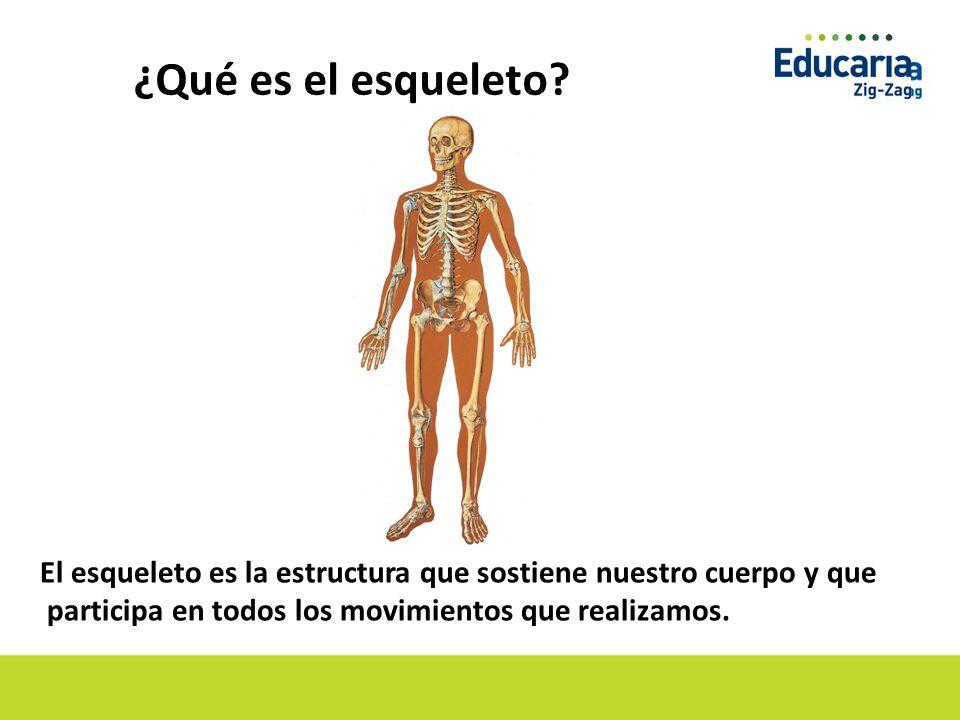 Dorable Cuerpo Esqueleto Friso - Imágenes de Anatomía Humana ...