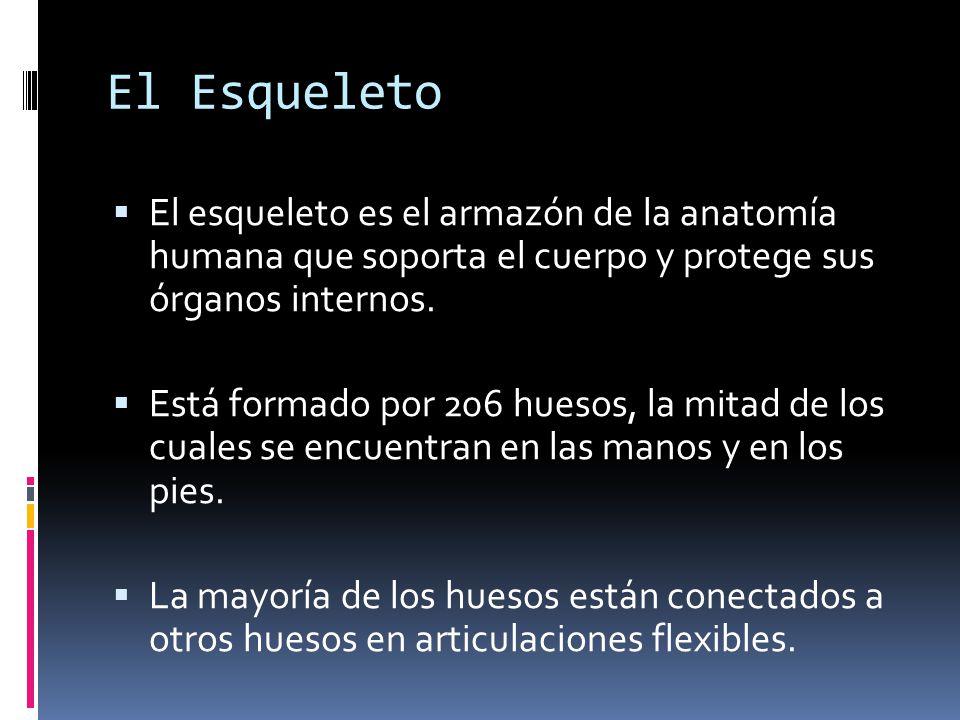 Fantástico órganos Esqueleto Cuerpo Regalo - Anatomía de Las ...