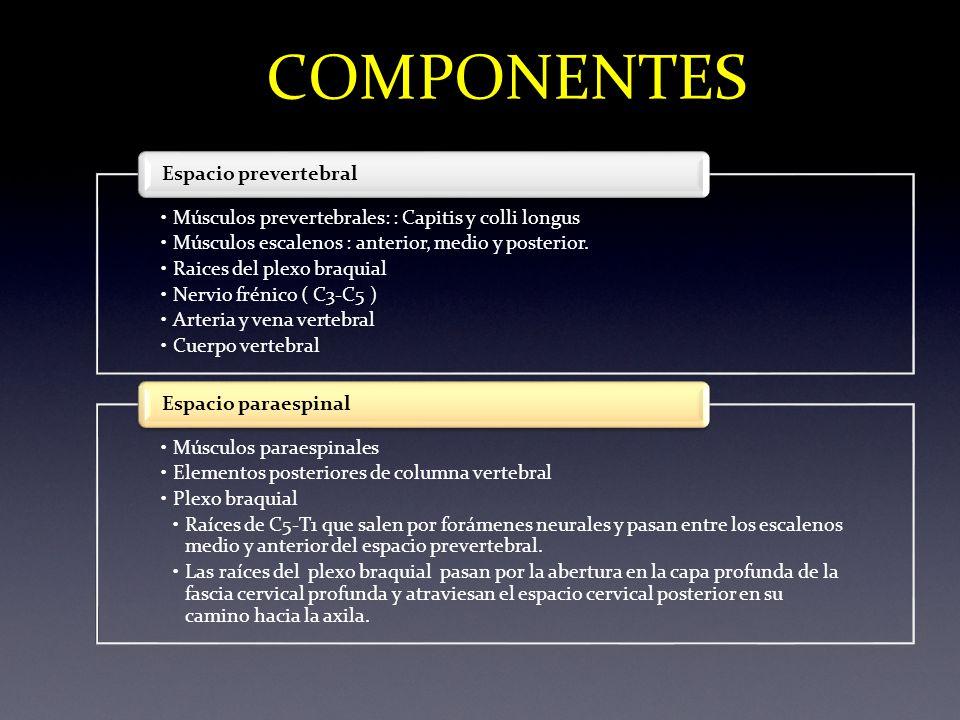 ESPACIO PERIVERTEBRAL - ppt video online descargar