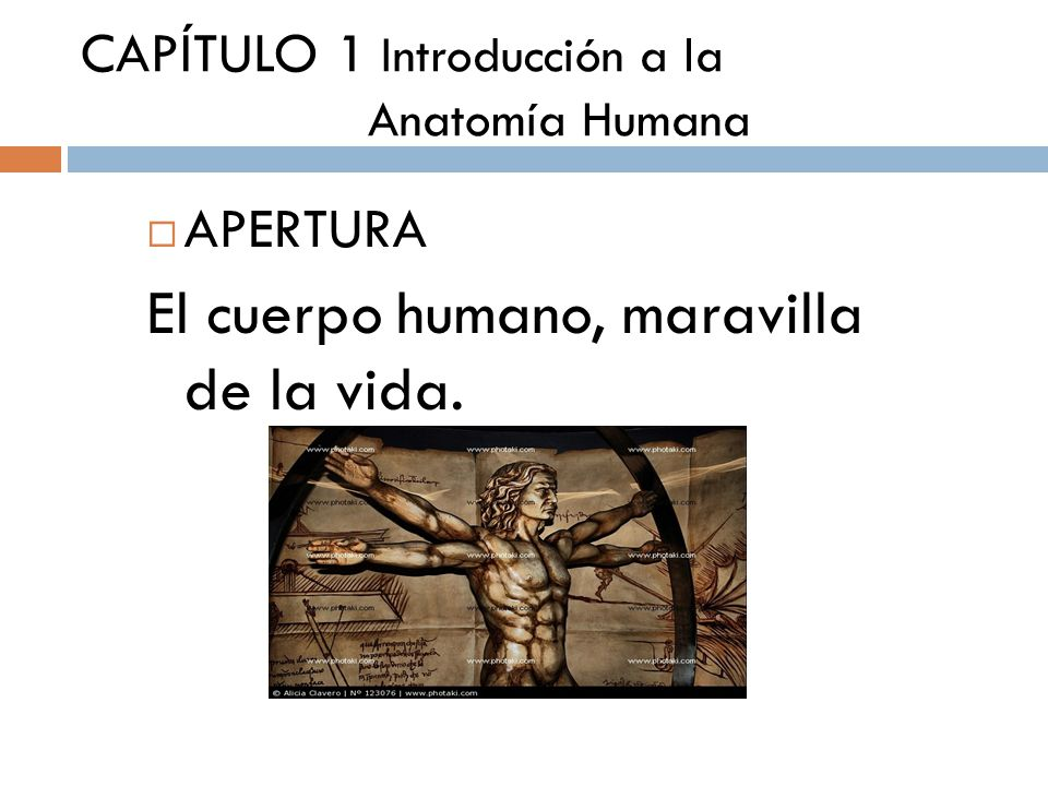 Naturaleza del Cuerpo Humano - ppt descargar