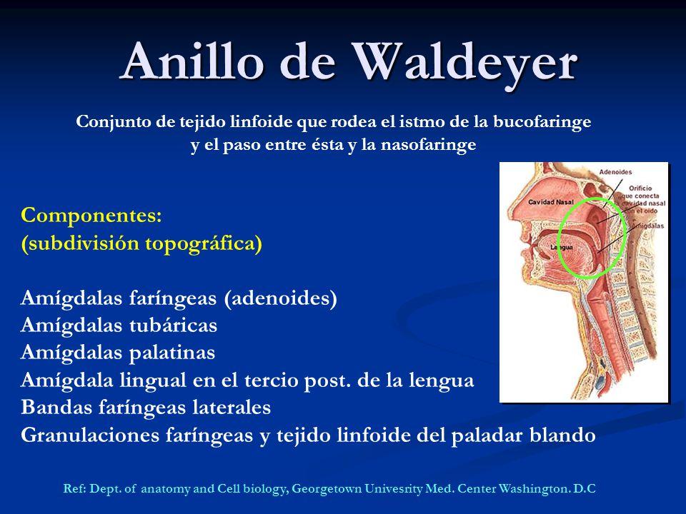 Adenoamigdalitis Aguda y Crónica - ppt video online descargar