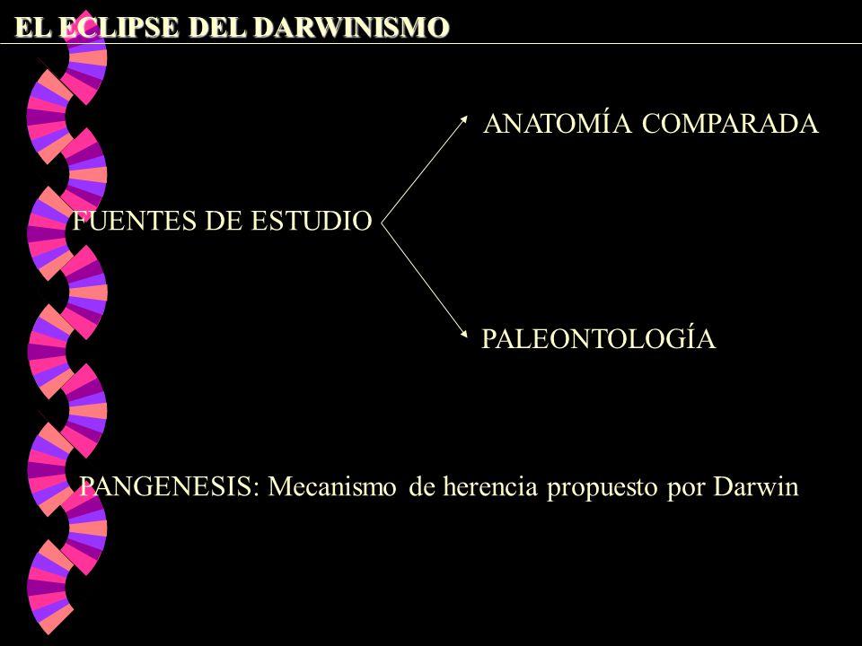 HISTORIA DE LA BIOLOGÍA LA TEORÍA SINTÉTICA DE LA EVOLUCIÓN - ppt ...