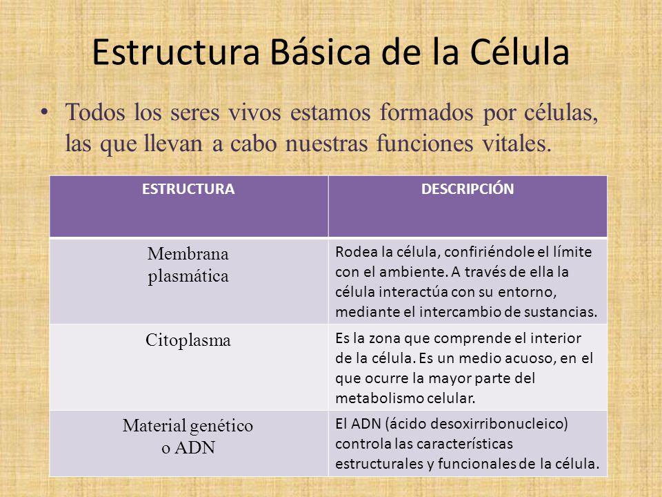 Estructura Basica De Las Celulas Prezi Puestortarnie Cf
