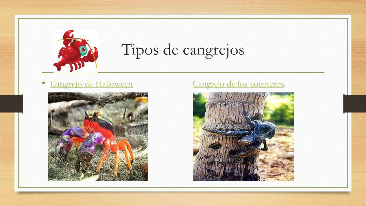 Phylum Arthropoda Subphylum Crustáceo. - ppt video online descargar