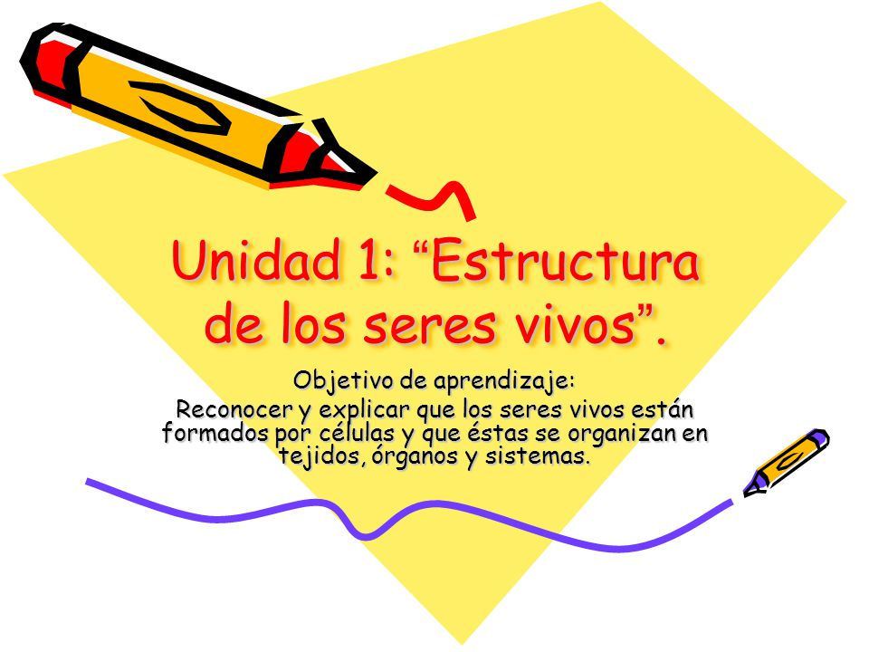 Unidad 1 estructura de los seres vivos ppt descargar - Estructuras libros vivos ...