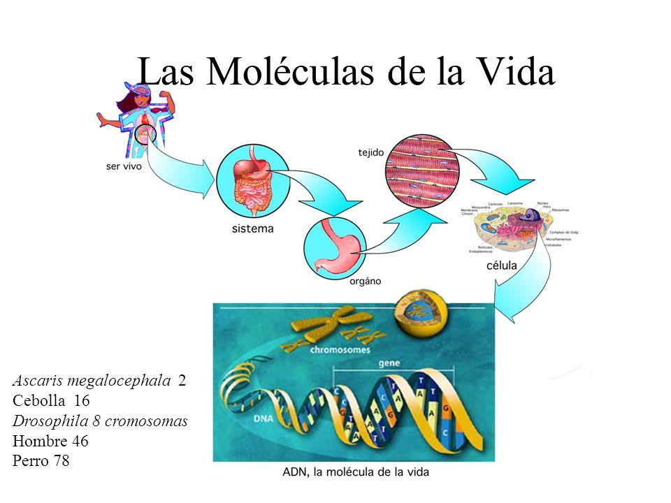 Las Moléculas de la Vida - ppt video online descargar